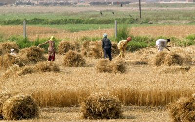 Pakistan's Agriculture Sector